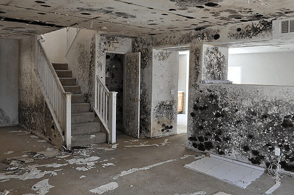 Mammoth Restoration & Reconstruction - Mold & Mildew Removal South Jersey